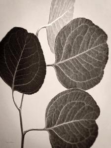 Eucalyptus Sepia by Debra Van Swearingen