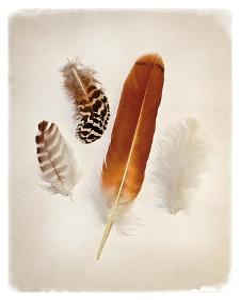 Feather Group I by Debra Van Swearingen