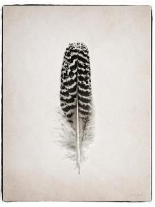 Feather I BW by Debra Van Swearingen