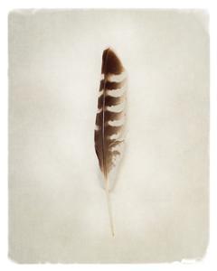 Feather IV by Debra Van Swearingen