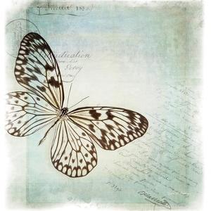 Floating Butterfly IV by Debra Van Swearingen