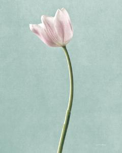 Light Tulips I Harbor Gray by Debra Van Swearingen