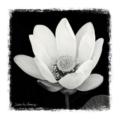 Lotus Flower I