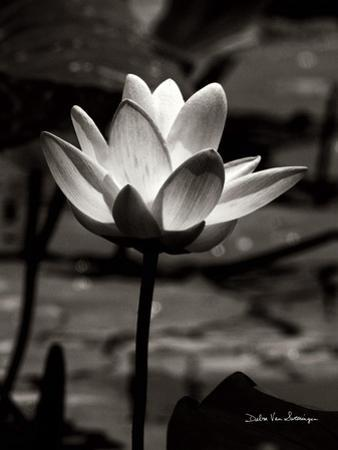Lotus Flower VII by Debra Van Swearingen