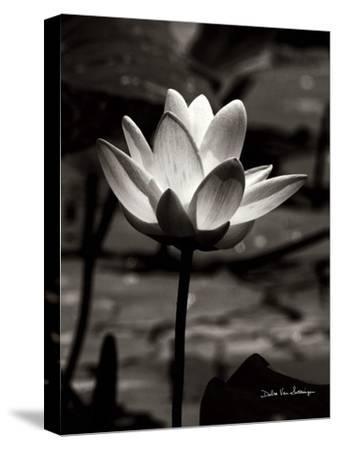 Lotus Flower VII