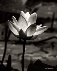 Lotus Flower VII by Debra Van Swearingen