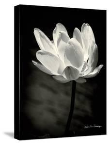 Lotus Flower X by Debra Van Swearingen