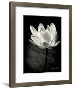 Flowers black and white photography artwork for sale posters and lotus flower x mightylinksfo