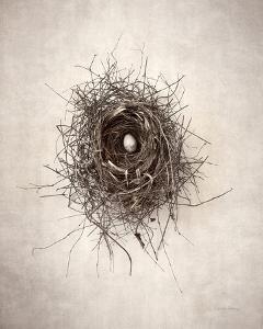 Nest I by Debra Van Swearingen
