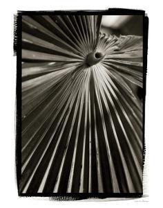 Palm Frond I by Debra Van Swearingen