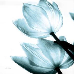 Translucent Tulips II Sq Aqua Crop by Debra Van Swearingen