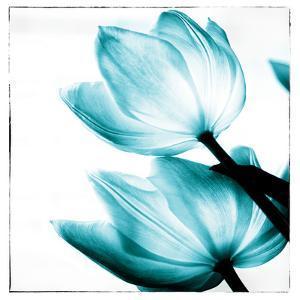 Translucent Tulips II Sq Teal by Debra Van Swearingen