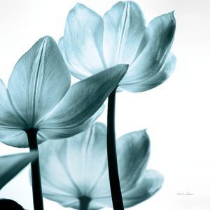 Translucent Tulips III Sq Aqua Crop by Debra Van Swearingen