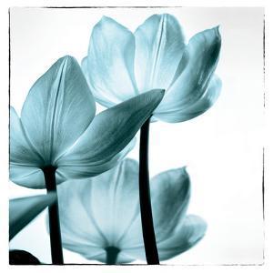 Translucent Tulips III Sq Aqua by Debra Van Swearingen