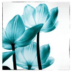 Translucent Tulips III Sq Teal by Debra Van Swearingen