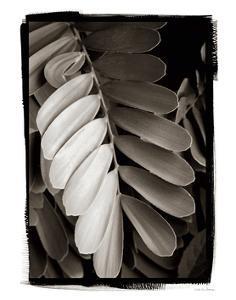 Tropical Plant I by Debra Van Swearingen