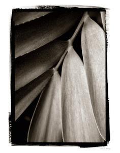 Tropical Plant II by Debra Van Swearingen