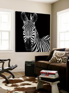 Zebra II by Debra Van Swearingen