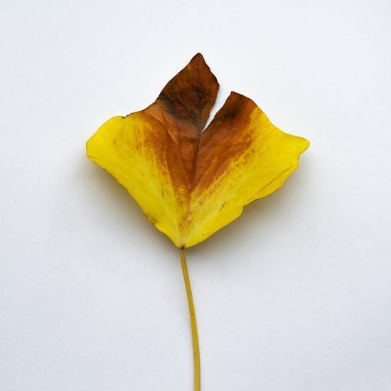 Decaying Leaf-Clive Nolan-Photographic Print