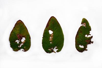 https://imgc.artprintimages.com/img/print/decaying-leaf_u-l-pz0tqq0.jpg?p=0