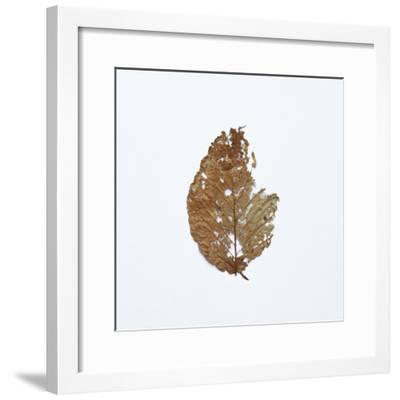 Decaying Leaf-Clive Nolan-Framed Photographic Print