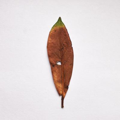 https://imgc.artprintimages.com/img/print/decaying-leaf_u-l-pz0udh0.jpg?p=0