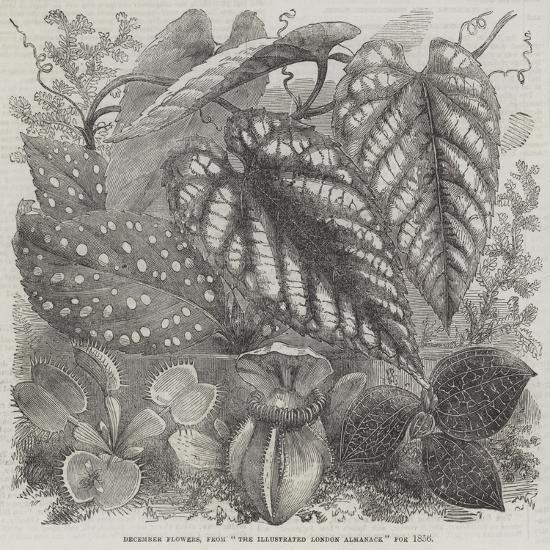 December Flowers, from The Illustrated London Almanack for 1856--Giclee Print