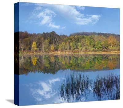 Deciduous forest along Lackawanna Lake, Ricketts Glen State Park, Pennsylvania-Tim Fitzharris-Stretched Canvas Print