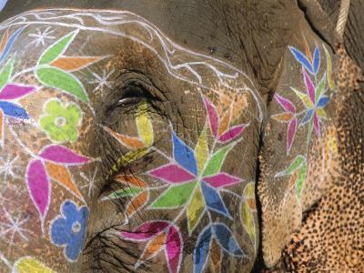 Decorated Elephant, Jaipur, Rajasthan, India, Asia-Bruno Morandi-Photographic Print