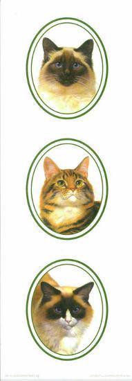 Decorative Panels Cats II--Art Print