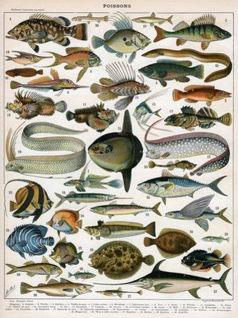 Decorative Print of 'Poissons' by Demoulin, 1897