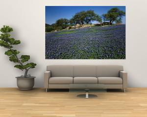 Bluebonnets, Hill Country, Texas, USA by Dee Ann Pederson