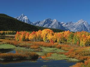 Mt. Moren, Oxbow Bend, Grand Tetons National Park, Wyoming, USA by Dee Ann Pederson