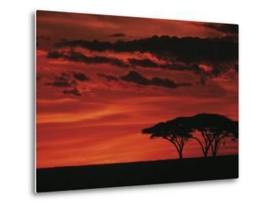 Sunset on Acacia Tree, Serengeti, Tanzania