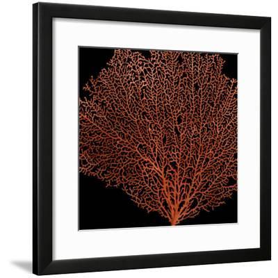 Deep 4: Red Fan Coral-Doris Mitsch-Framed Photographic Print