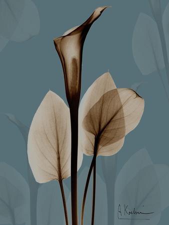 https://imgc.artprintimages.com/img/print/deep-flora-1_u-l-pyjvia0.jpg?p=0