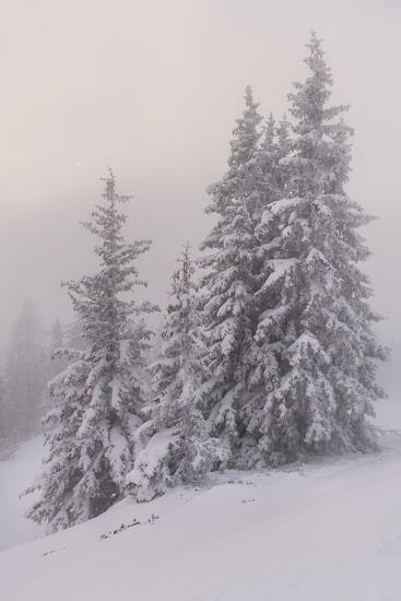 Deeply Snow Covered Trees Salzburg Austria Photographic Print By Rainer Mirau Art Com
