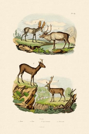 Deer, 1833-39--Giclee Print