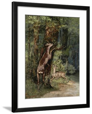 Deer, 1868-Gustave Courbet-Framed Giclee Print