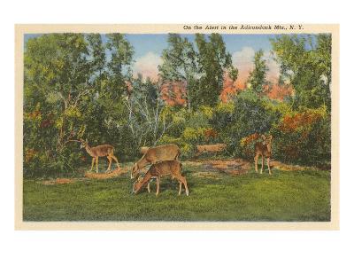 Deer, Adirondack Mountains, New York--Art Print