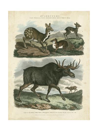 Deer and Moose-Sydenham Teast Edwards-Art Print