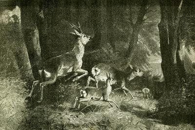Deer Austria 1891--Giclee Print