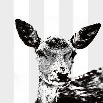 Deer Black And White - Square-Lebens Art-Art Print