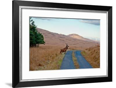 Deer Crossing Road on Jura-Jaime Pharr-Framed Photographic Print