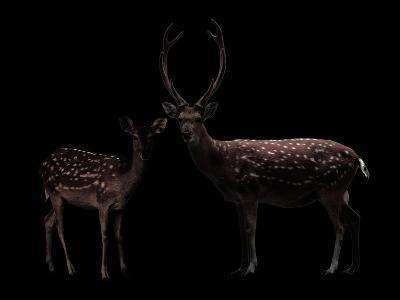 Deer, Dear--Photographic Print