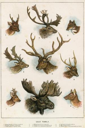 https://imgc.artprintimages.com/img/print/deer-family_u-l-pjqdh70.jpg?p=0