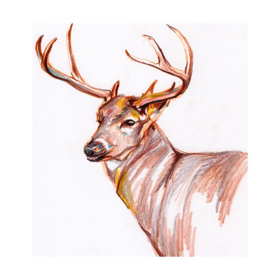 Deer in Pencil-Anne Seay-Art Print