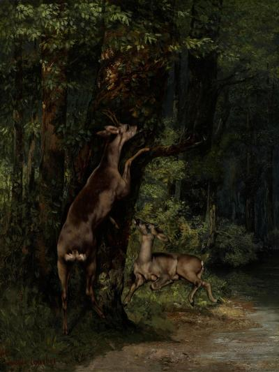 Deer in the Forest, 1868-Gustave Courbet-Giclee Print