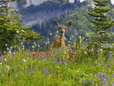 https://imgc.artprintimages.com/img/print/deer-in-wildflowers_u-l-pzkvwu0.jpg?p=0