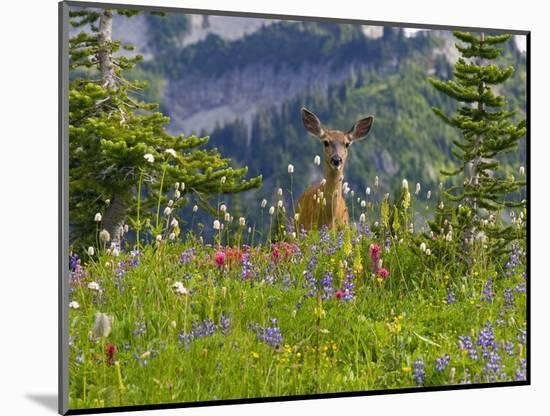 Deer in Wildflowers-Craig Tuttle-Mounted Photographic Print